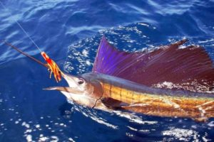 Costa Rica Sailfishing Charters
